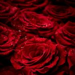 YesPower_volg je hart_ rode rozen